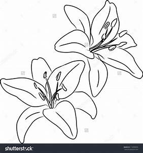 Flower Drawing In Pencil Flowers Drawings Chainimage