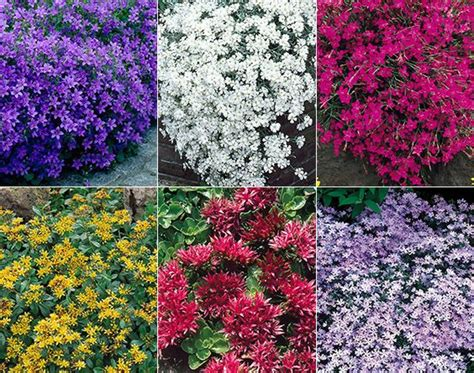 perrenial ground cover paths perennials and google on pinterest