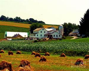 Amish Farm On Laundry Day Photograph by Desiree Paquette