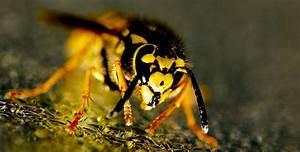 Wespenfalle Selber Bauen : wespenfalle selber bauen ganz einfach ~ Markanthonyermac.com Haus und Dekorationen