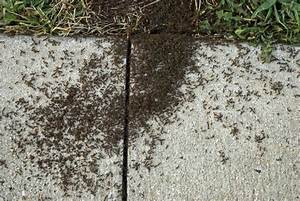 Carpenter bees house damage, pavement ants how to get rid ...