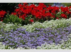 Landscape Color Schemes Ideas for Plant Combinations