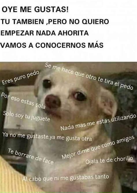 Memes De Chihuahua - perro chihuahua meme s mega memeces