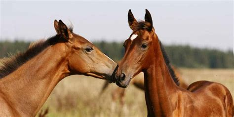 young horses control horse parasite foals deworming treatments receive within five four should