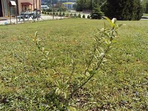 Comment Tailler Un Abricotier : faut il que je taille mon abricotier au jardin fruitier ~ Melissatoandfro.com Idées de Décoration