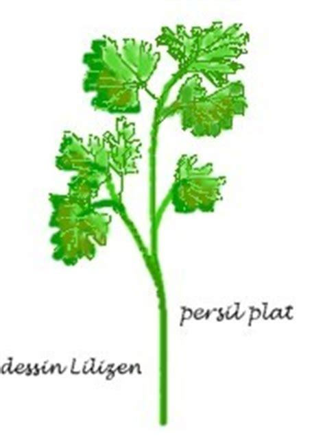 recettes de cuisine persil photo de a pictogrammes lilizen cuisine