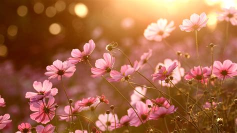 Colorful Nature Sunlight Plants Flowers Wallpapers Hd