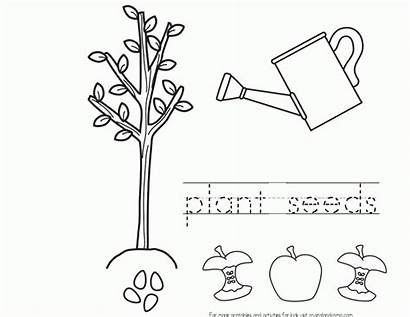 Seeds Appleseed Johnny Coloring Pages Plant Seed