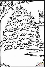 Pine Coloring Tree Pages Snow Printable Drawing Dot sketch template