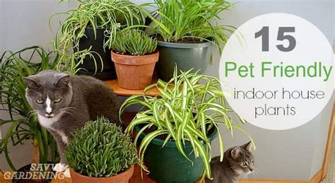 pet friendly house plants 15 indoor plants that are safe