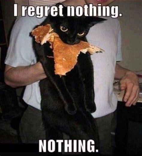 Funny Lol Memes - i regret nothing funny cat funny meme gif