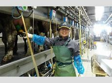 Israel helps transform China's Dairy Industry ISRAEL21c