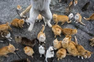 cat island japan aoshima island overrun by cats