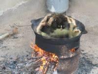 Kochen Für Katzen : die rebellion der katzen stupidedia ~ Lizthompson.info Haus und Dekorationen