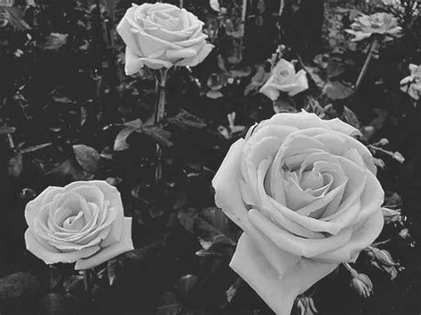 17 Best Images About Pale Skin & Photography On Pinterest