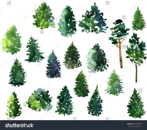 balsam fir tree water set conifer trees drawing by watercolor stock illustration