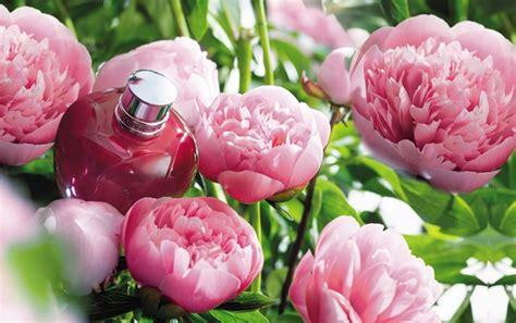 l occitane en provence si鑒e l 39 occitane en provence pivoine flora 2015 parfumuri noi
