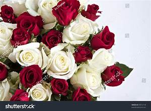Red White Roses Isolated On White Stock Photo 69012118 ...
