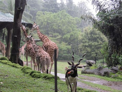 harga tiket masuk taman safari bogor