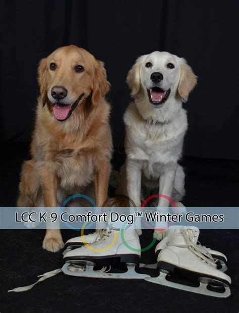 lcc comfort dogs 212 best images about k9 comfort dogs on