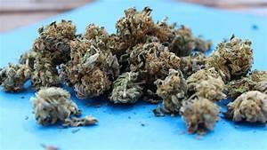 How Long Do Cannabis Flowers Last