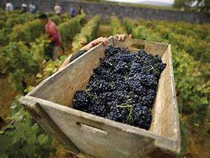 Côte de Beaune - Burgundy Wine Tour - 12 wines tasting ...