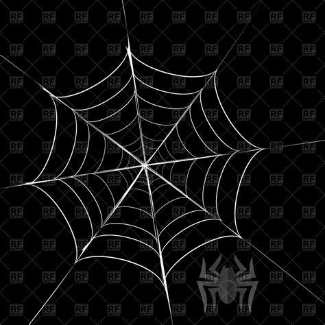 spider  cobweb vector image vector artwork  plants