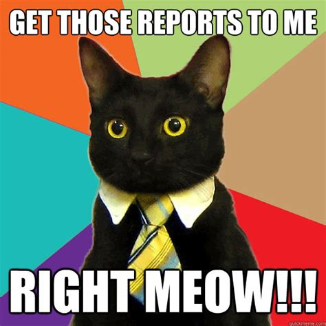 Cat Meow Meme - get those reports to me right meow business cat quickmeme