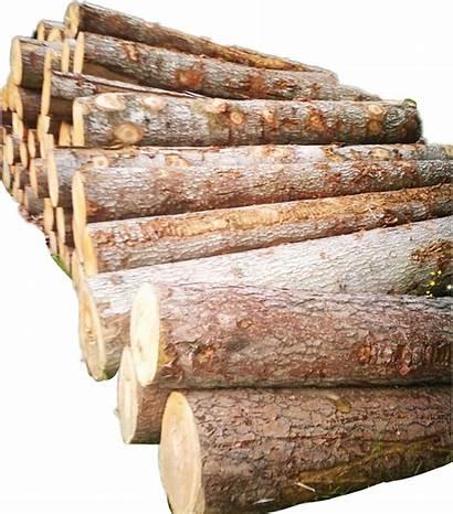 Clipart Pile Wood Firewood Transparent Tree Trees