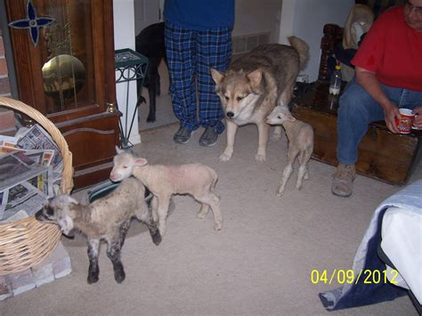 Some people clean this time of year, others fill their carts. Pin by Four Country Gals on Our Dogs   Dogs, Cuddling, Animals