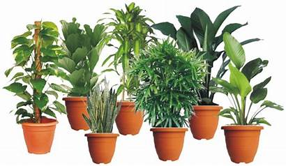 Plants Malaysia Plant Indoor Catalogue Css Rent