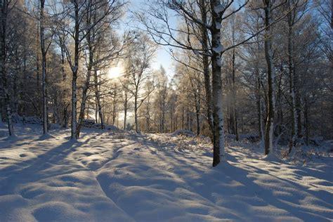 snowy birches  finzean west woods  paul chapman cc