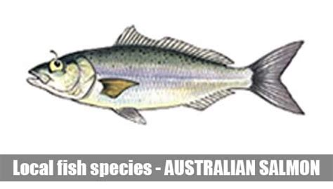 fish species information guide melbourne victoria