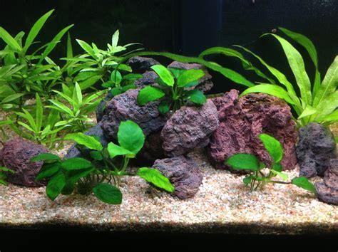 de lave aquarium de lave aquarium 28 images id 233 e d 233 co pour l aquarium pierraille de lave pour filtre