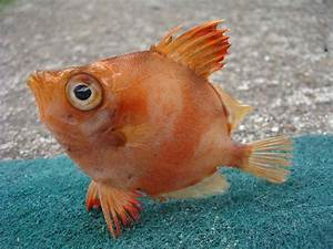 Fish | Info & Photos | The Wildlife