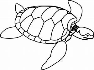 Turtle Shell Drawing - ClipArt Best