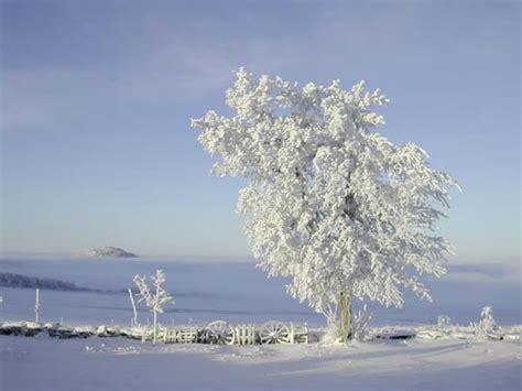 chambres hotes auvergne arbre la vidalle d 39 eyglet