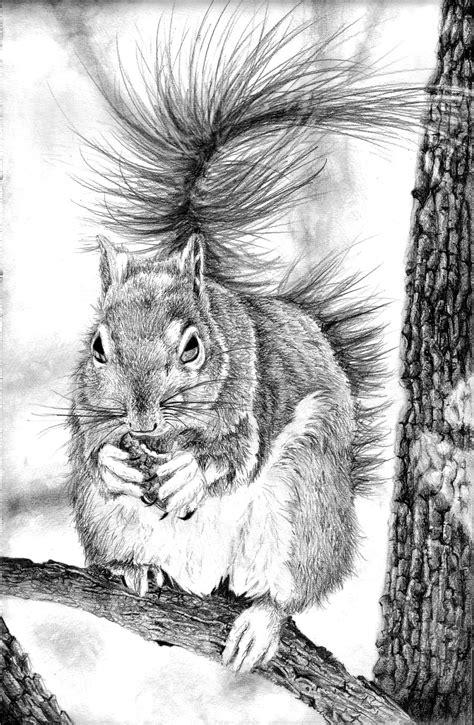 squirrel pencil drawing  bannanapower  deviantart