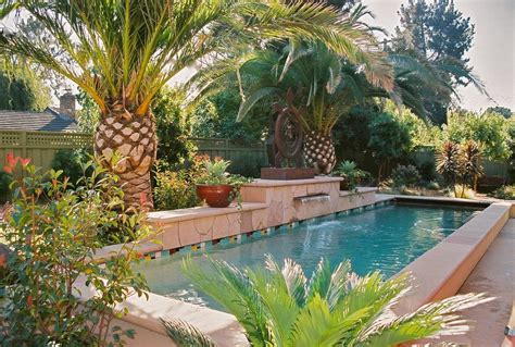 banana tree pool tropical  canary island palm piece