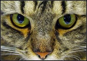 cat s eye grace elliot cat s seeing is believing