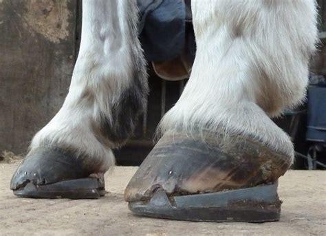 navicular horse disease syndrome horses equine treatment heel hooves wedges above lameness farriery hoof foot treating henderson cole been pressure