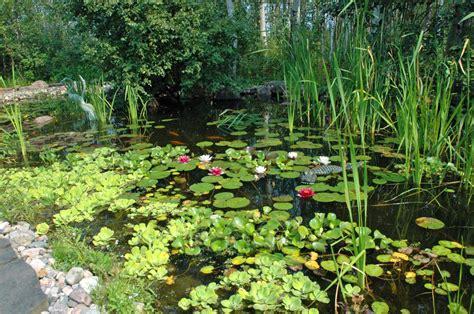 20 best aquatic plants for garden mybktouch com