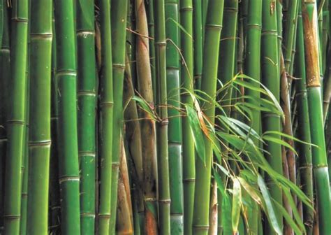 Bamboo Floor: Bamboo Flooring More Expensive