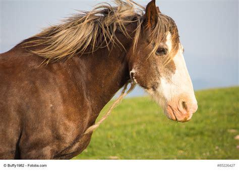 mustang pferde zubehoer gebraucht kaufen ebay