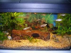 Liter Aquarium Berechnen : mp 60 l komplettaquarium aquarien und zubeh r ~ Themetempest.com Abrechnung
