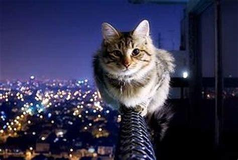 gatto  bilico al esimo piano paperblog