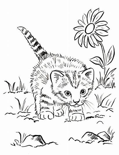 Coloring Cat Pages Realistic Printable Kitten Colorings