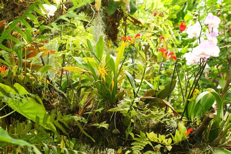 orchideen aus samen ziehen orchideen 187 wissenswertes zur herkunft