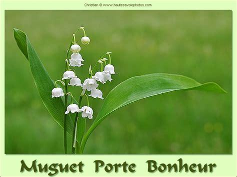 image muguet porte bonheur carte de voeux avec du muguet porte bonheur