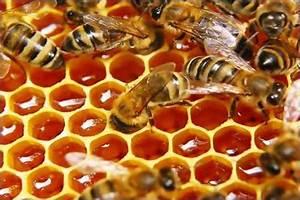 Рецепт средство для потенции орех мед